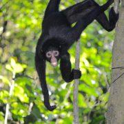 observation faune en Amazonie