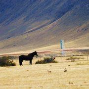 steppe, Patagonie argentine
